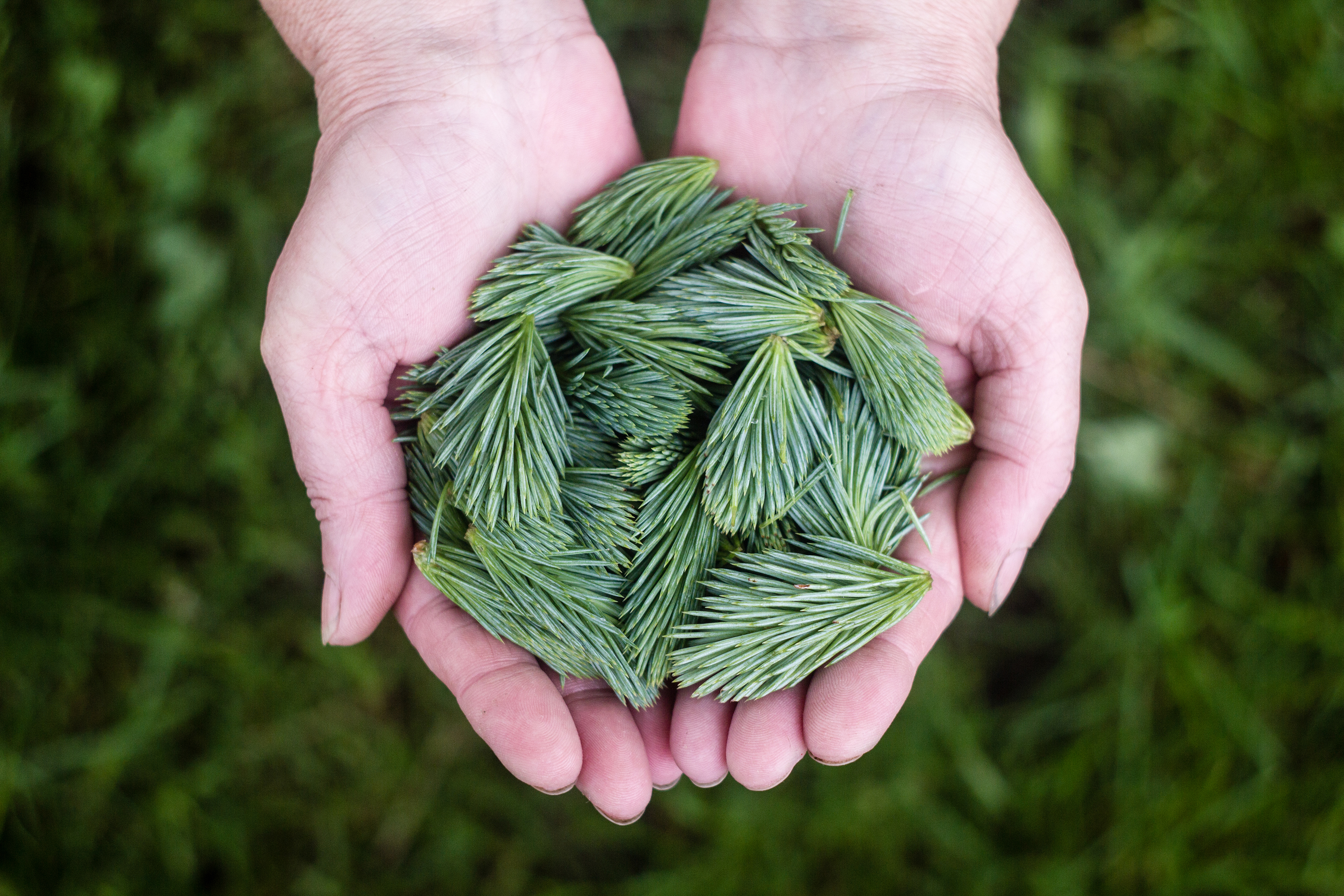 sample image of pine needles